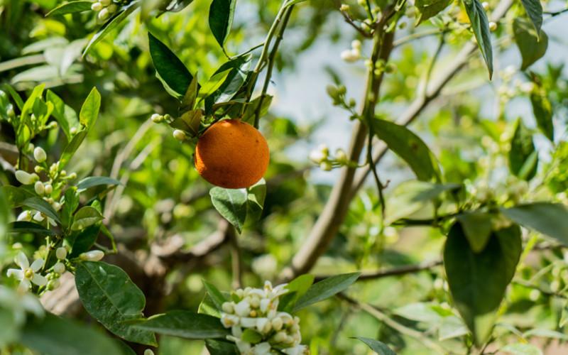 euro company mandarino